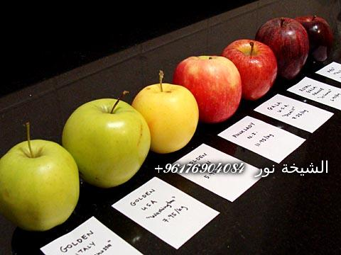 صورة جلب الحبيب بالتفاحه شيخة نور الصادقة 0096176904084