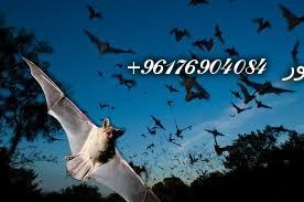 صورة بعض الحيوانات التي تستخدم في السحر(الخفافيش)-أقوى شيخة روحانية نور 0096176904084