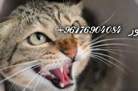 صورة بعض الحيوانات لعمل السحر بأنواعـه(القطط)-أكبر وأعظم شيخة روحانية في العالم نور الصادقة0096176904084
