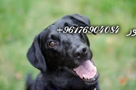 صورة بعض الحيوانات لعمل السحر بأنواعـه(الكلاب)-أكبر وأعظم شيخة روحانية في العالم نور الصادقة0096176904084
