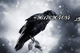 صورة بعض الحيوانات التي تستخدم في السحر(الغربان)-أقوى شيخة روحانية نور 0096176904084