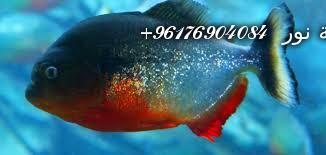 صورة بعض الحيوانات التي تستخدم في السحر(الأسماك)-أقوى شيخة روحانية نور 0096176904084