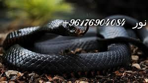 صورة بعض الحيوانات التي تستخدم في السحر(الثعابين)-أقوى شيخة روحانية نور 0096176904084