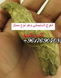 صورة أصدق شيخة روحانية نور 0096176904084-العرج السليماني للجلب القوي والهيبة
