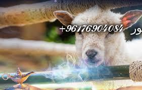صورة تفسير حلم الكبش-اقوى شيخة روحانية نور 0096176904084